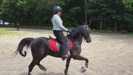 jacki, Tennessee Walking Horses Gelding for sale in Tennessee