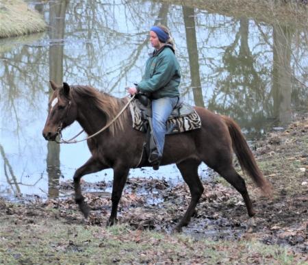 Snickers, American Quarter Horse Mare for sale in Missouri