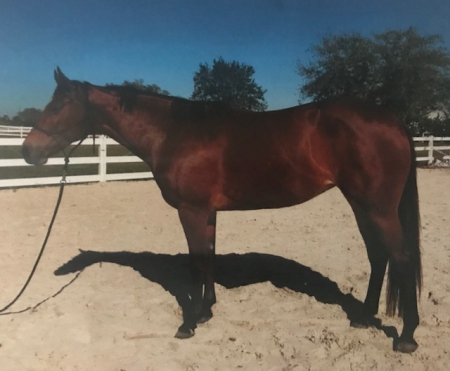 AL BE YOUR DETAIL, American Quarter Horse Mare for sale in Florida