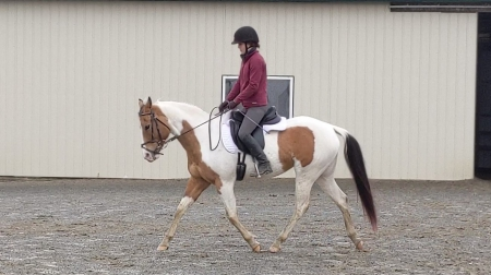 Attention mare lovers, beautiful buckskin paint for your consideration, Pinto Mare for sale in Virginia