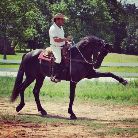 LUCKY, Warmbloods (All) Stallion for sale in South Carolina