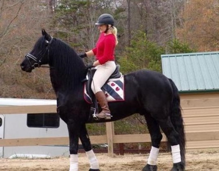 Inkg, Other Gelding for sale in California