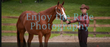 Invited Investors Only, American Quarter Horse Gelding for sale in Ohio