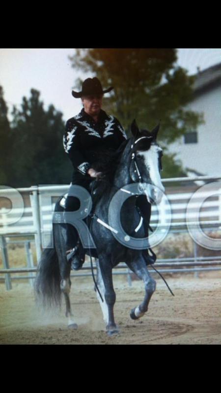 LUCKY IRISH LIVIN MYSTERI, Tennessee Walking Horses Gelding for sale in California