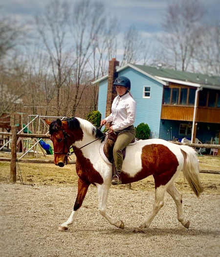 Flashy Bay Tobiano Sport Pony Mare 14.3hh 7 yrs old - Jumps, English, & Western!, American Quarter Horse Mare for sale in Pennsylvania