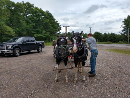 Nice team of Pony mares that ride and drive!!, Ponies Mare for sale in Missouri