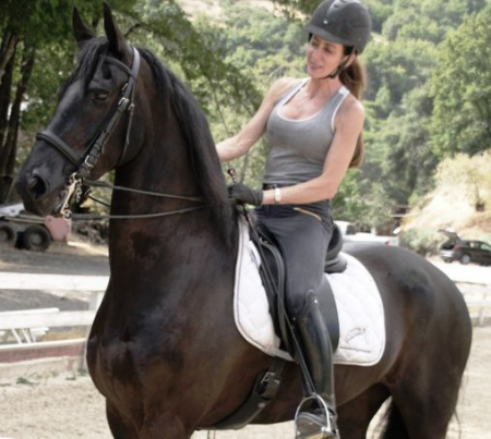 Atticus STER, Warmbloods (All) Gelding for sale in California