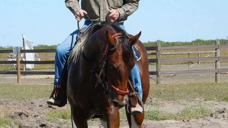 Leanne, American Paint Horse Association Mare for sale in Wisconsin
