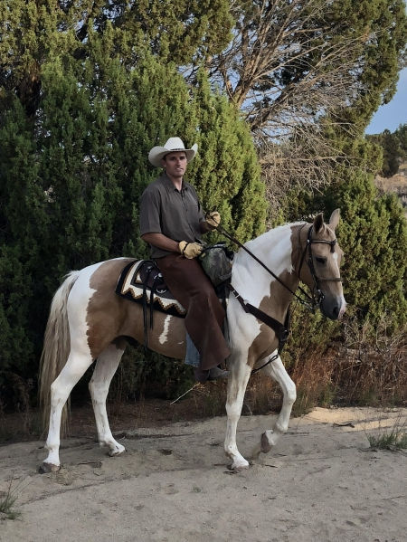 Lemondrop , Tennessee Walking Horses Gelding for sale in New Mexico