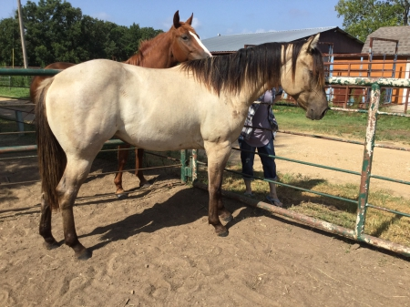 Cowgirl In Pearls, American Quarter Horse Filly for sale in Oklahoma
