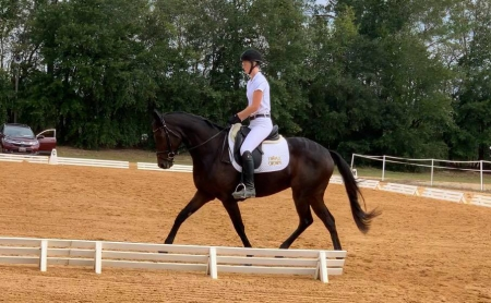 Wycked Good, Thoroughbred Mare for sale in Virginia