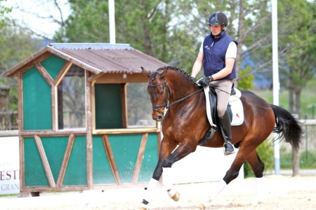Zebb, Dutch Warmblood Gelding for sale in Texas