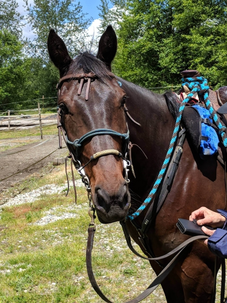 PRICE REDUCED Tim (Film At Ten), Standardbred Gelding for sale in Washington