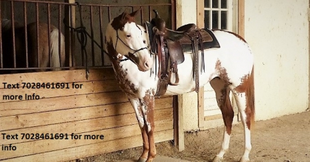 Luccy, Quarter Horse Cross Mare for sale in California