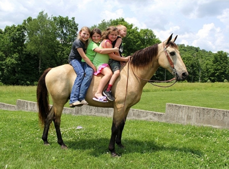 Starbucks Flavor Flav, Kentucky Mountain Saddle Horse Gelding for sale in Kentucky