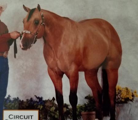 Justa Super Cruzer, American Quarter Horse Gelding for sale in Wisconsin