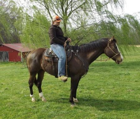 Twista, American Quarter Horse Gelding for sale in Colorado