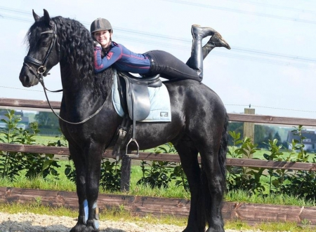 Champion, Other Gelding for sale in California