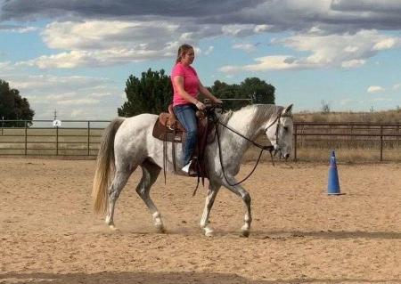 Ndenn, American Quarter Horse Gelding for sale in Texas