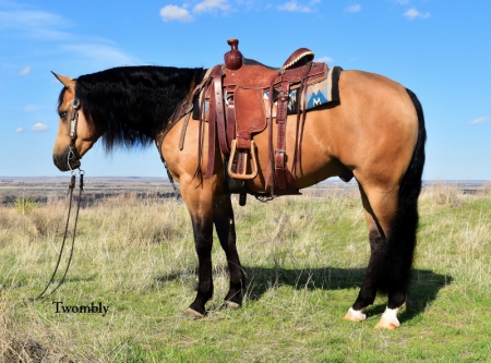 Nebraska Horses For Sale - MyHorseForSale com Equine Classifieds
