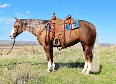 Sis, American Quarter Horse Mare for sale in Nebraska
