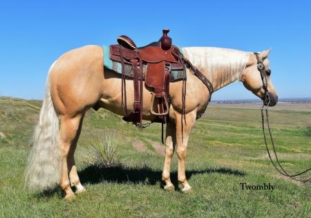 Bumble, American Quarter Horse Gelding for sale in Nebraska