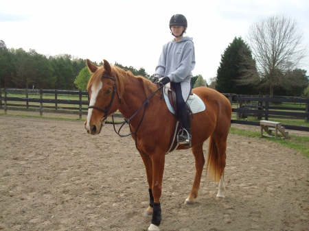 HARBOR, Thoroughbred Gelding for sale in Virginia
