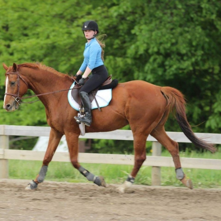 Odwin du Bres, Selle Francais Gelding for sale in Ohio