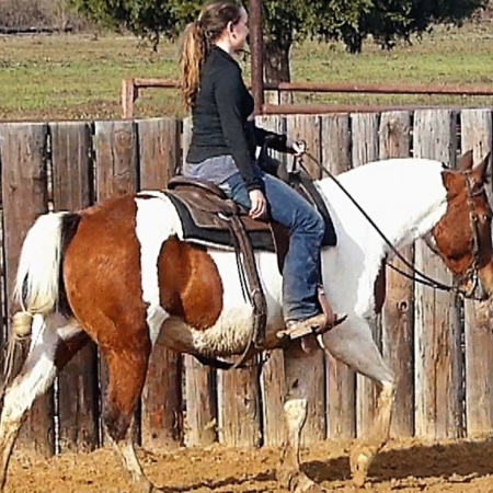 SADIE, American Quarter Horse Mare for sale in Ohio