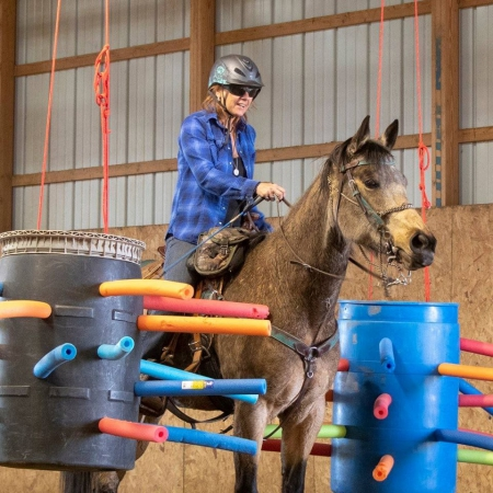 Lily Ann, Missouri Fox Trotting Horse Mare for sale in Colorado