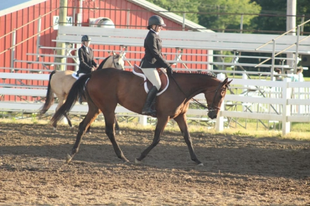Darling OTTB Mare Started in Dressage for lease, Thoroughbred Mare for sale in Ohio