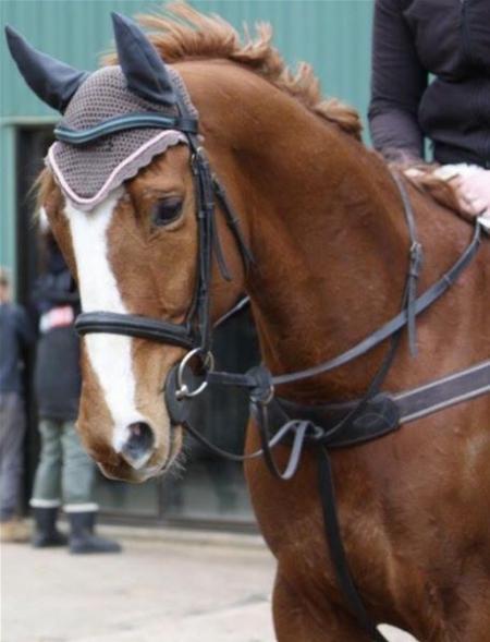Jacky, American Quarter Horse Gelding for sale in Virginia