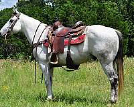 joo, American Quarter Horse Gelding for sale in California
