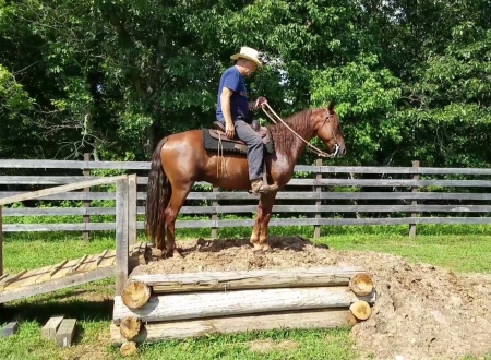 Don't Do Me Like That aka Dude , Missouri Fox Trotting Horse Gelding for sale in Missouri