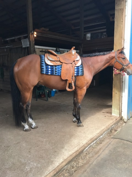 Oh So Blessed, American Quarter Horse Gelding for sale in Washington