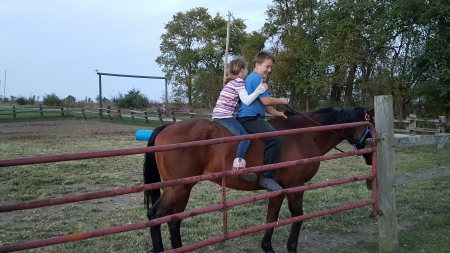 Bugs, American Quarter Horse Gelding for sale in Illinois