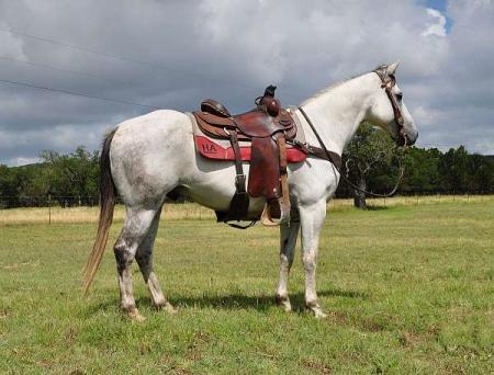 Endenns, American Quarter Horse Gelding for sale in Louisiana
