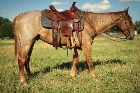 Boomer, American Quarter Horse Gelding for sale in Oklahoma