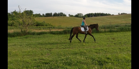 Sultry Encounter, Thoroughbred Gelding for sale in Maryland