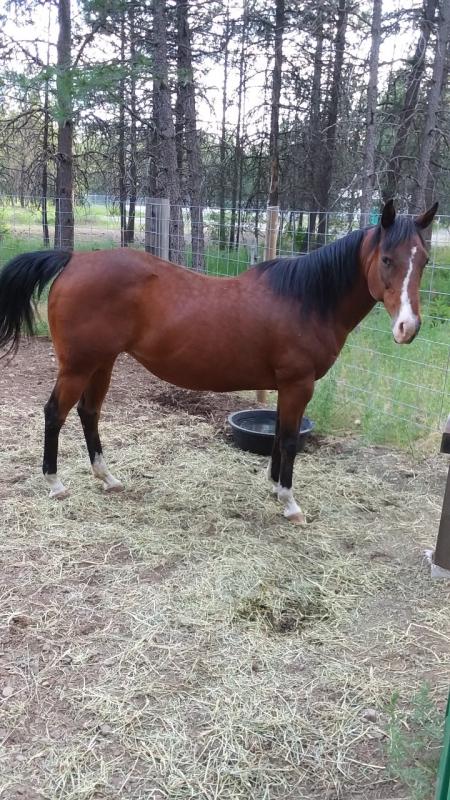 Suzi, American Quarter Horse Mare for sale in Idaho