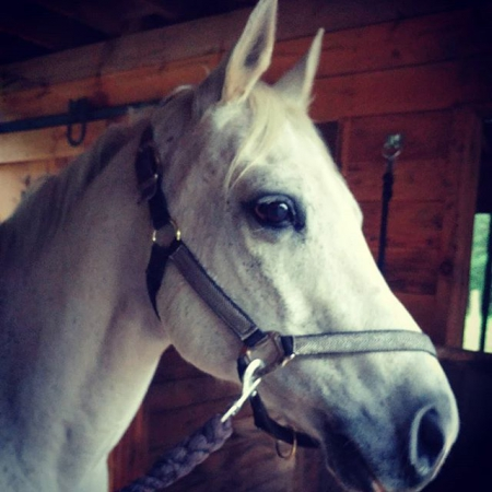 Begos Blue Luck, Quarter Pony Gelding for sale in Massachusetts