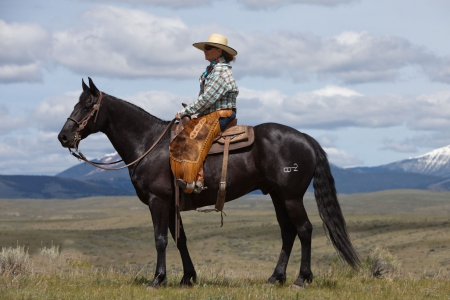 Artorius, Sport Horse Of Color Gelding for sale in Montana