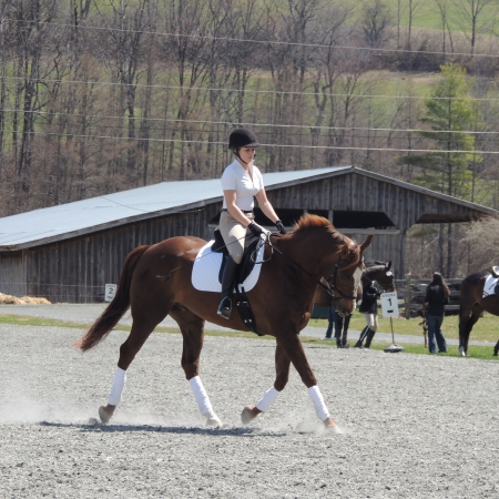 A Dash of Class (Dakota), Warmbloods (All) Gelding for sale in Vermont