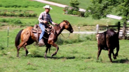CPR Ginlo Pepnplay, American Quarter Horse Mare for sale in Kentucky