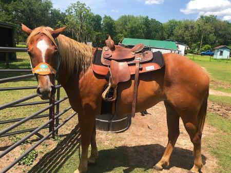 Phoenix, American Quarter Horse Mare for sale in Texas