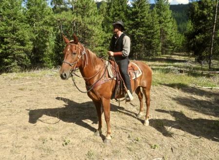 Hoss, American Quarter Horse Gelding for sale in Montana