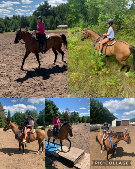 Theo, American Quarter Horse Gelding for sale in Wisconsin