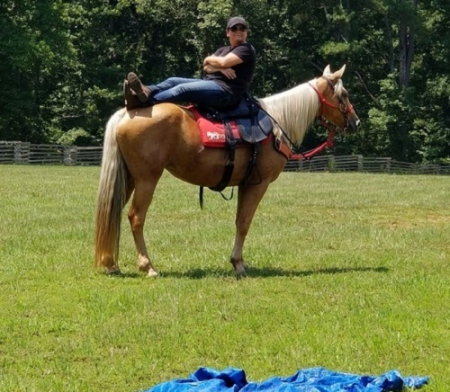Tennessee Walking Horses Horses For Sale - MyHorseForSale