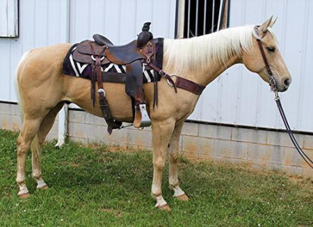 Handsome Palomino Quarter Horse (Trail & Ranch) read description, American Quarter Horse Gelding for sale in Kentucky