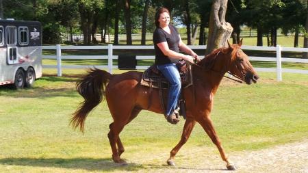 Jazz's Banner   (Read Description), Missouri Fox Trotting Horse Gelding for sale in Missouri